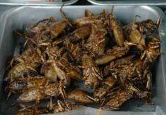 Toebiter_fastfood_thailand