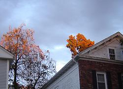 Prov_autumn