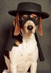 Maskdog