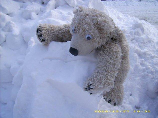 carbuncle winter