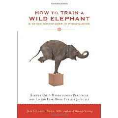 how to train a wild elephant